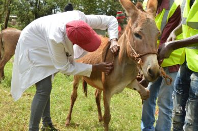 LSP injecting a donkey