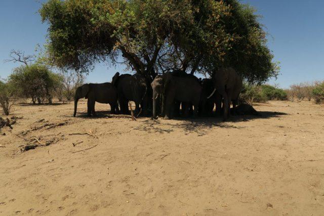 Chobe National Park, Botswana Chobe National Park Safari Tour Review