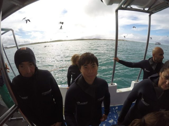 Great White Shark Cage Diving, How to Save Money on Great White Shark Cage Diving in South Africa