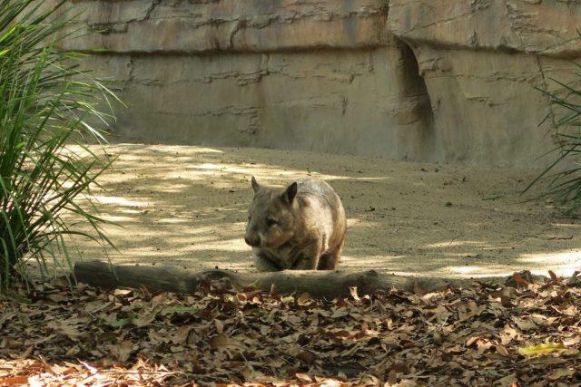 Australia Zoo, 35+ Pictures of the Amazing Australia Zoo (Steve Irwin's Zoo)