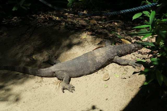 Puerto Princesa Underground River, Puerto Princesa Underground River – One of the Seven Wonders of Nature (23+ Pictures!)