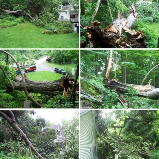 A Tree Falls in the Neighborhood with Ken