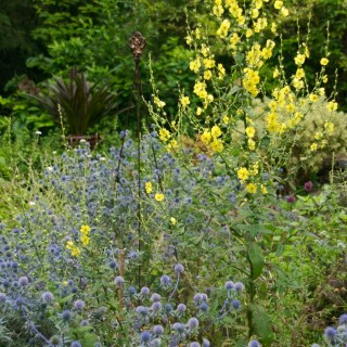 Self-sowing Perennials and Biennials with Ken