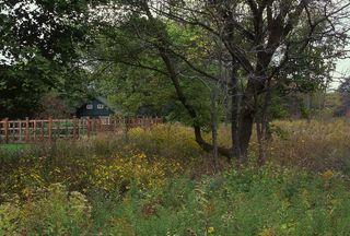 Meadow-prairie