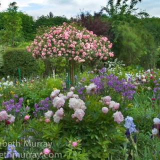 Claude Monet's Garden at Giverny with Elizabeth Murray