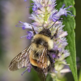 Native Pollinators with Heather Holm