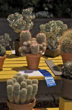 Philly cactus winner03 05 2011 edit