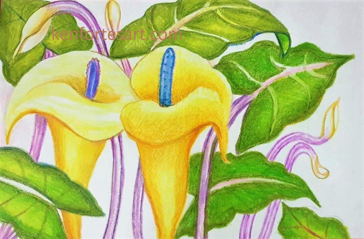 Arum lilies - oil pastels - Kenfortes children online arts classes
