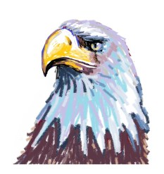 how to draw bald eagle in easy steps -kenfortes art classes-online children and adults drawing coloring -lessons