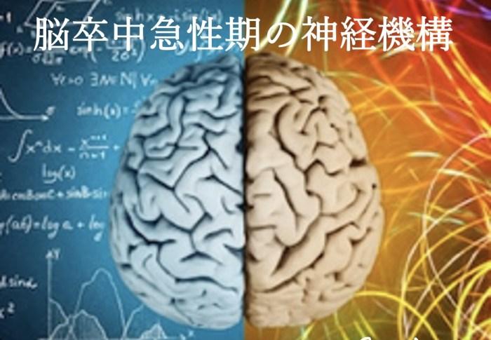 脳卒中急性期の神経機構
