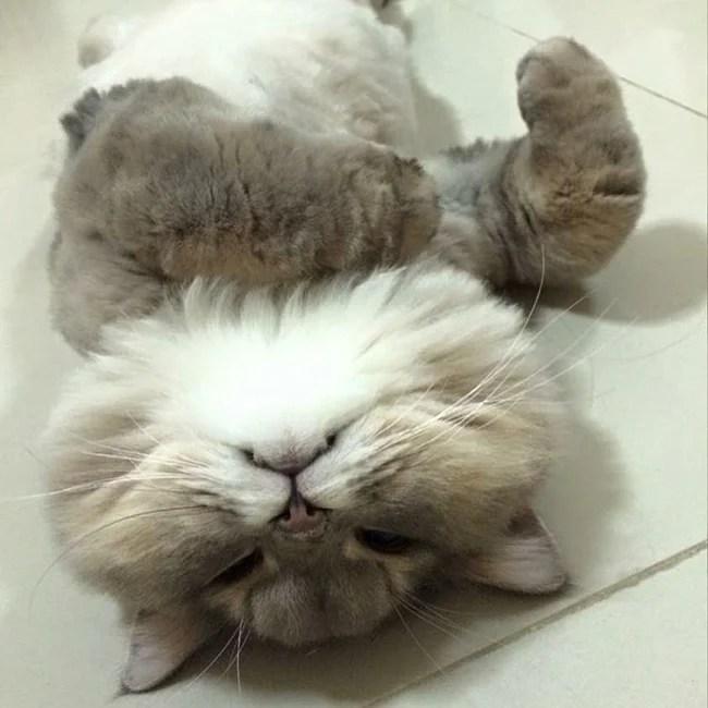 Em mèo béo như khủng long tẩm bột nhưng suốt ngày nũng nịu đeo ba lô cute - Ảnh 13.