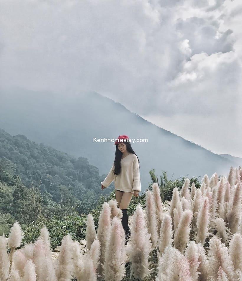 Cầu Mây Homestay Tam Đảo: Con đường tre dẫn vào miền hoa hương thảo