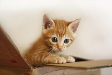 猫の迷惑問題の対策!猫が来ないようにする対策と被害の予防方法