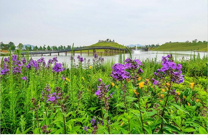韓國全羅南道景點 | 順天灣國家園林+順天灣自然生態公園-探訪百花齊放,壯麗的自然景觀;欣賞有如海上波浪的蘆葦田自然景區。
