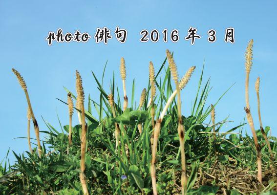 Photo俳句2016年3月投稿分