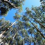 森林 2017.9.21