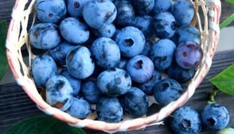 目に良い栄養素を多く含むブルーベリーの美味しい食べ方とレシピ
