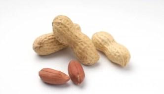 落花生の小さな粒に詰まった栄養パワーと効能と食べ過ぎの影響は?