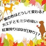 【まとめ】秋紅葉狩りのトリビア