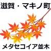 メタセコイア並木(滋賀)の紅葉2018!見ごろ時期&混雑状況は【画像写真】