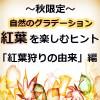 紅葉狩りの漢字や言葉の由来(語源)・起源や歴史は?日本の能文化との関係も