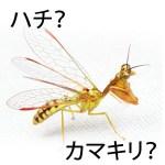 【画像】カマキリモドキの種類や毒・日本の分布(生息地)は?幼虫は飼育できるの?
