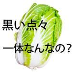 【画像】白菜の黒い粒!ブツブツ斑点は何?葉カビの黒班病・虫と違うの?