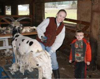web-shearing-3