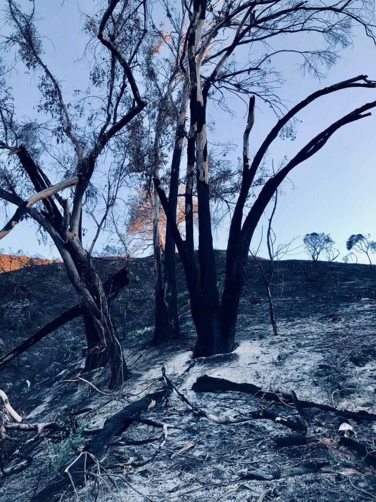 Burnt Tree - Close Up
