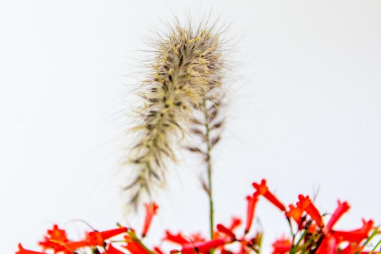 Grass & Firecracker Fern