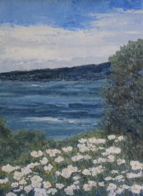 Coastal Poppies
