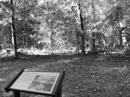 Confederate Colonel William Martin ordered a cease fire to remove burning wounded soldiers from these woods