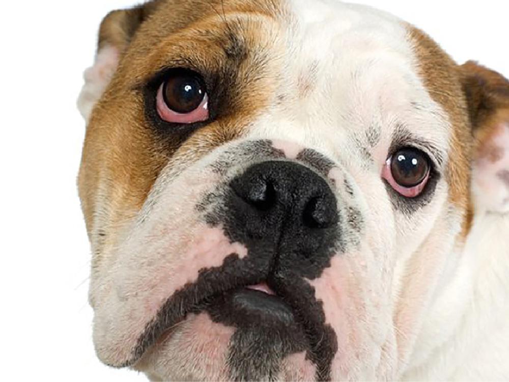 dog_cat_allergies_marietta_kennesaw
