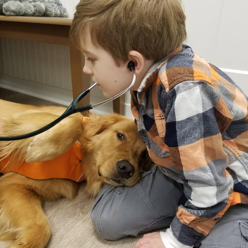 veterinarian_pet_vaccines_laser-treatment_cancer_care_pain_management_kennesaw_marietta_georgia