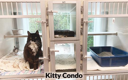 cat_boarding_pet-sitting_kennesaw_marietta_georgia