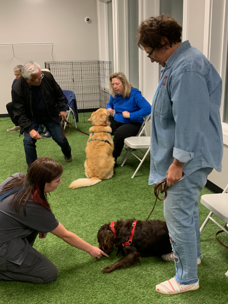 puppy_dog_training_kennesaw_marietta_georgia