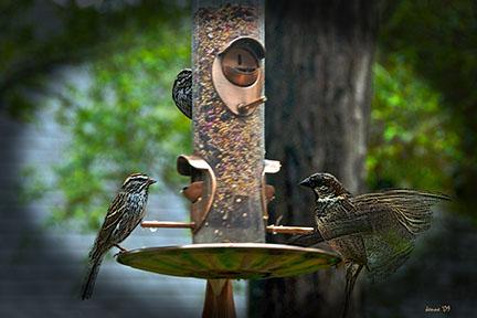 birds-feeding-and-st-pats-2009-5692-art-ii-blog