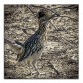 4-H Group-0780-4 Roadrunner with twig blog framed