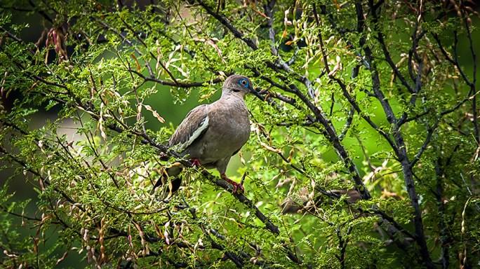 Dove (1 of 1) blog