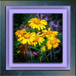 sneezeweed-1-of-1-blog-ii