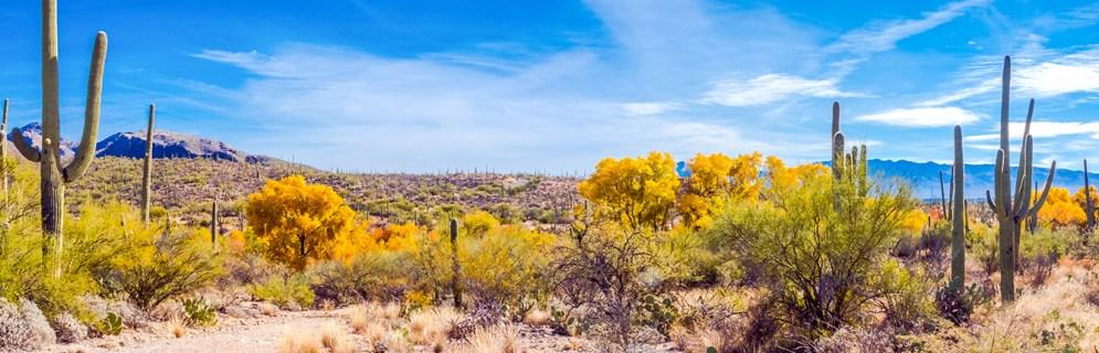 sabino-canyon-fall-colors-panorama-2-blog