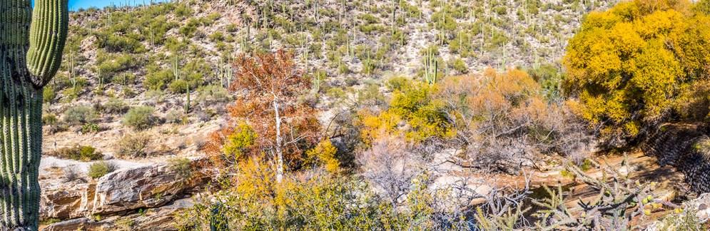 sabino-canyon-fall-colors-panorama-3-blog