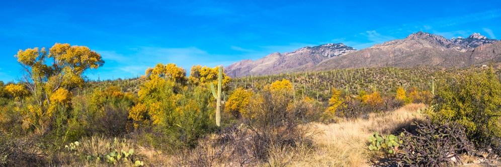 sabino-canyon-fall-colors-panorama-blog