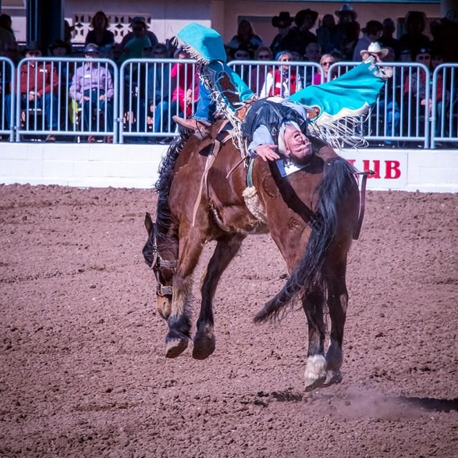 rodeo-2017-0733-blog