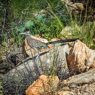Roadrunner-9356 blog