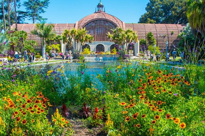 Balboa Park Flowers-1971 blog