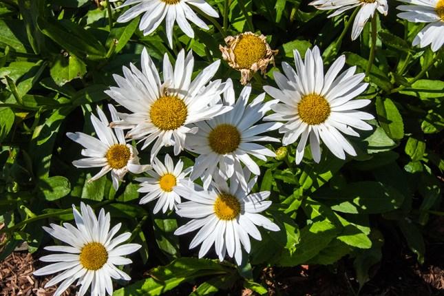 Balboa Park Flowers-1984 blog