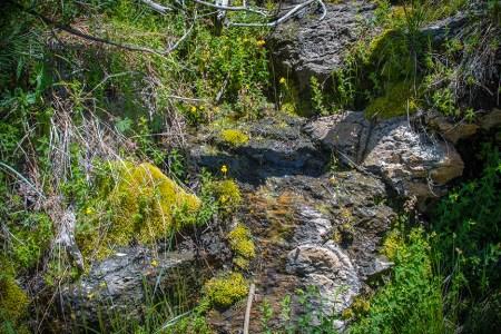 Box Camp Trail-1904 blog