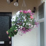 Hanging basket by front door