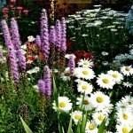 gardencomp
